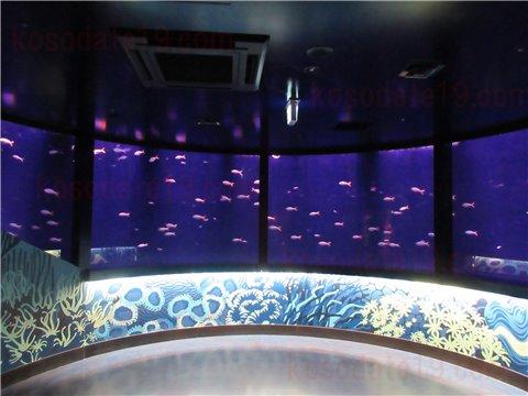 レゴランドの水族館シーライフのさかなのリング。ユメウメイロがドーナツ型の水槽をくるくる回ってます1