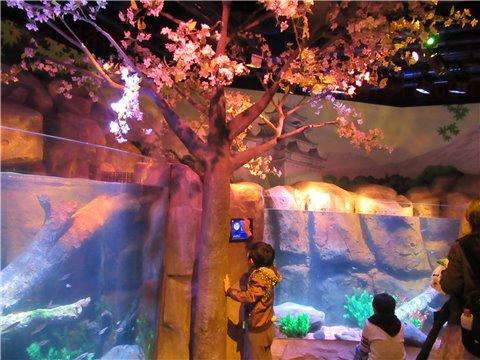 シーライフ名古屋の東海地方を流れる木曽川をイメージした展示ゾーン(SEALIFEレゴランドの水族館)1