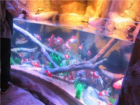 シーライフ名古屋の東海地方を流れる木曽川をイメージした展示ゾーン(SEALIFEレゴランドの水族館)4