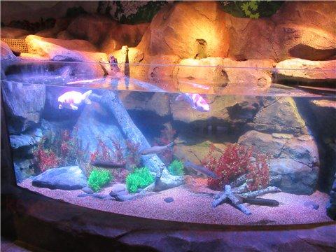 シーライフ名古屋の東海地方を流れる木曽川をイメージした展示ゾーン(SEALIFEレゴランドの水族館)3