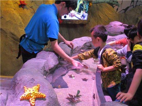 シーライフ名古屋のロックプール。海の生き物を触れる・触れ合えるゾーン(SEALIFEレゴランドの水族館)2