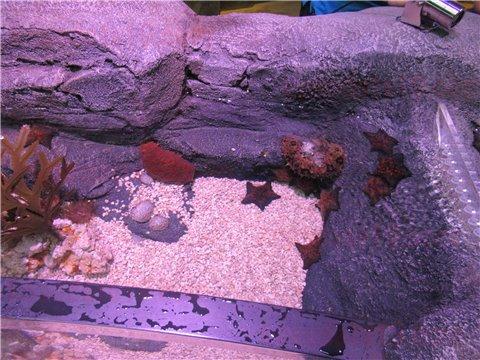 シーライフ名古屋のロックプール。海の生き物を触れる・触れ合えるゾーン(SEALIFEレゴランドの水族館)3