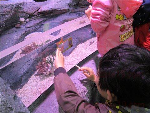 シーライフ名古屋のロックプール。海の生き物を触れる・触れ合えるゾーン(SEALIFEレゴランドの水族館)4