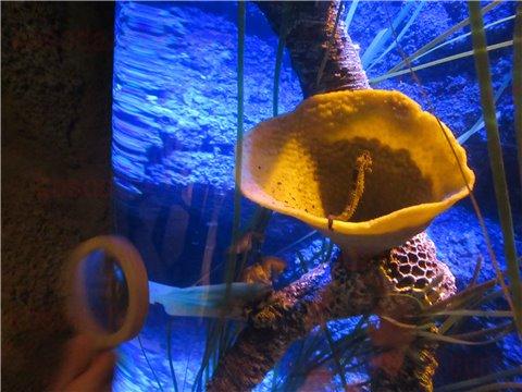 シーライフ名古屋のタツノオトシゴのすみか。タツノオトシゴを展示したゾーン。(SEALIFEレゴランドの水族館)3