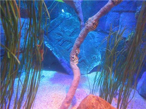 シーライフ名古屋のタツノオトシゴのすみか。タツノオトシゴを展示したゾーン。(SEALIFEレゴランドの水族館)1