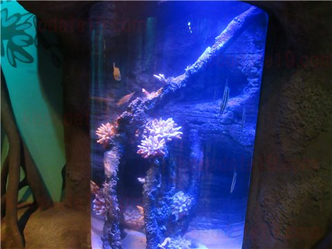 シーライフ名古屋のタツノオトシゴのすみか。タツノオトシゴを展示したゾーン。(SEALIFEレゴランドの水族館)4