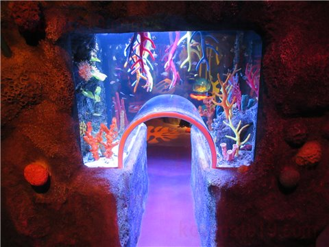シーライフ名古屋のサンゴ礁の海。色とりどりのサンゴと魚が展示してあるゾーン。(SEALIFEレゴランドの水族館)1