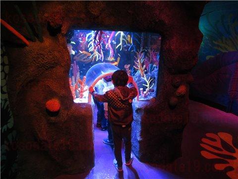 シーライフ名古屋のサンゴ礁の海。色とりどりのサンゴと魚が展示してあるゾーン。(SEALIFEレゴランドの水族館)2