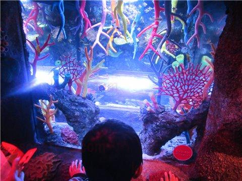 シーライフ名古屋のサンゴ礁の海。色とりどりのサンゴと魚が展示してあるゾーン。(SEALIFEレゴランドの水族館)3