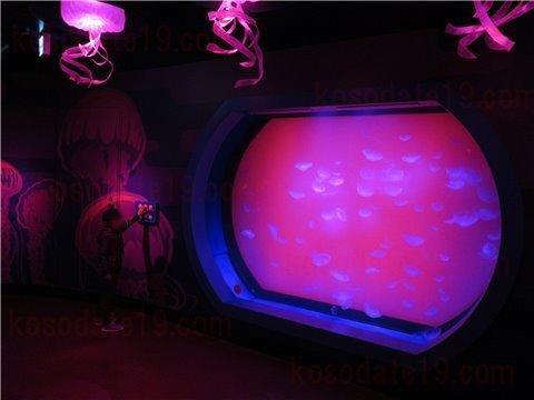 シーライフ名古屋のクラゲの海。綺麗なクラゲが泳いでいるゾーン。(SEALIFEレゴランドの水族館)2