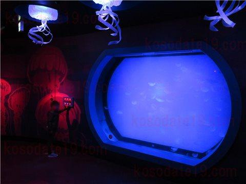 シーライフ名古屋のクラゲの海。綺麗なクラゲが泳いでいるゾーン。(SEALIFEレゴランドの水族館)3