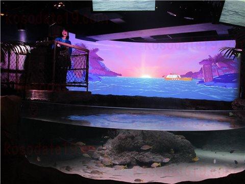シーライフ名古屋のスティングレイ・ベイ。エイとお魚が泳いでいるゾーン。(SEALIFEレゴランドの水族館)1
