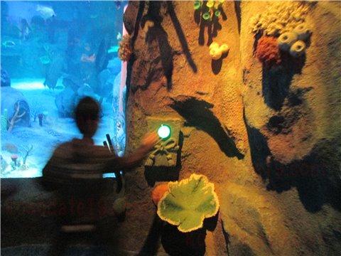 シーライフ名古屋の竜宮城。シーライフナゴヤのテーマであった「浦島太郎」の世界のゾーン。(SEALIFEレゴランドの水族館)8